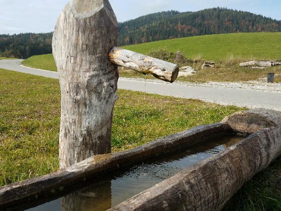 Holzbrunnen als Weidetränke oder Baumbrunnen Wasserspeier